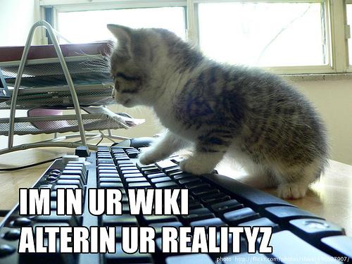 wiki cat